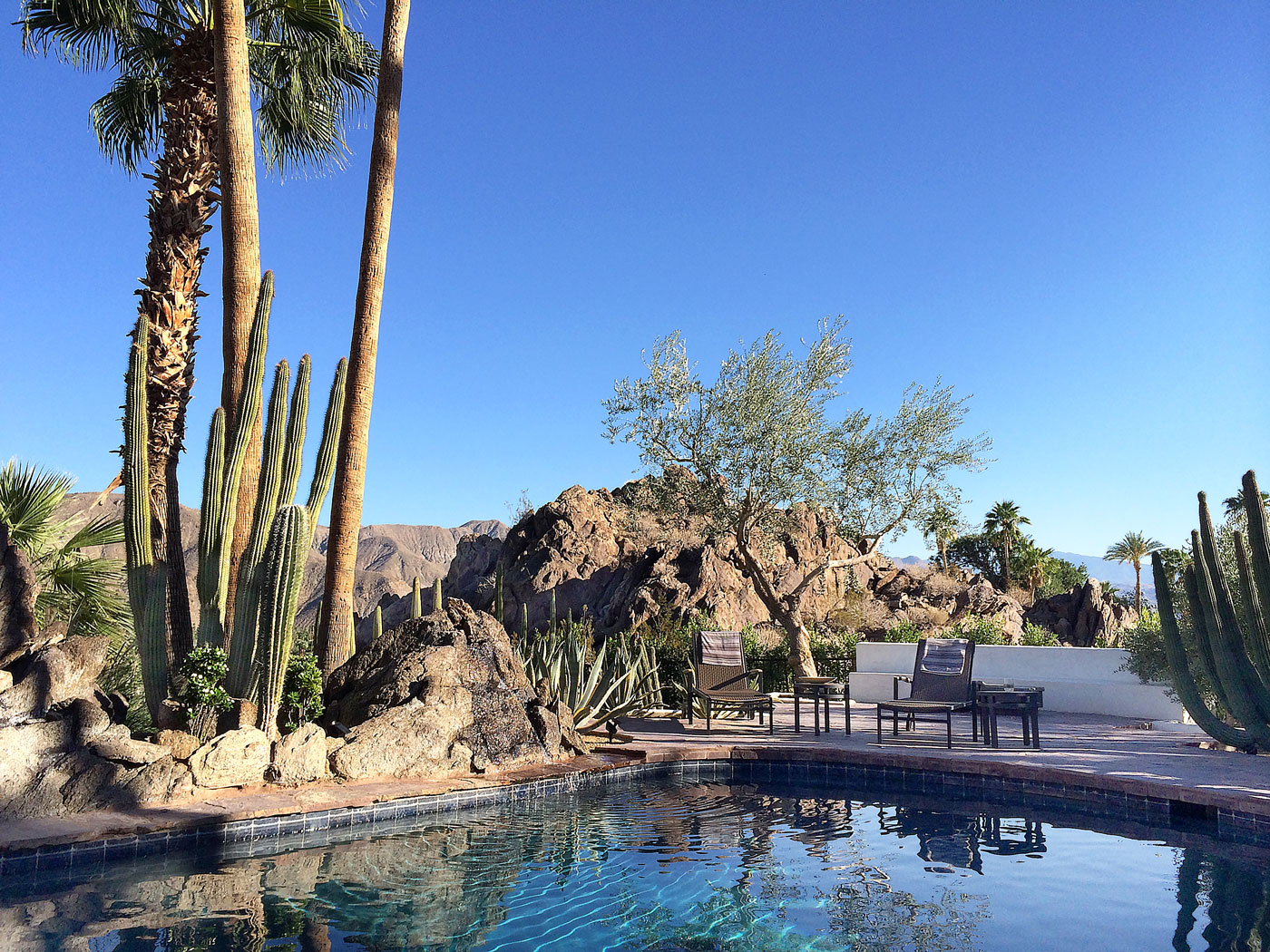 02 Oasis+pool+surrounded+by+mature+cactus+gardens+and+180+degree+mountain+views